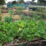 services_garden_thumbnail_chelsea_heights_community_centre